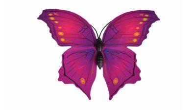 papallona lila