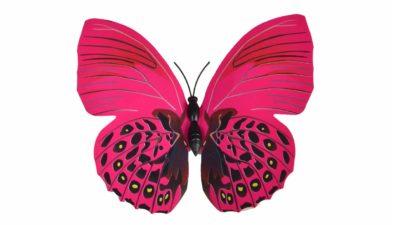 Papallona rosa