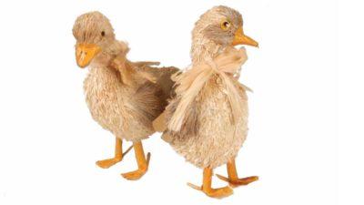 peluixos de pollets