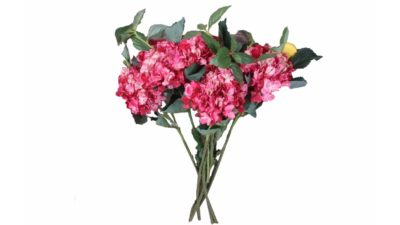 flors roses amb fulles